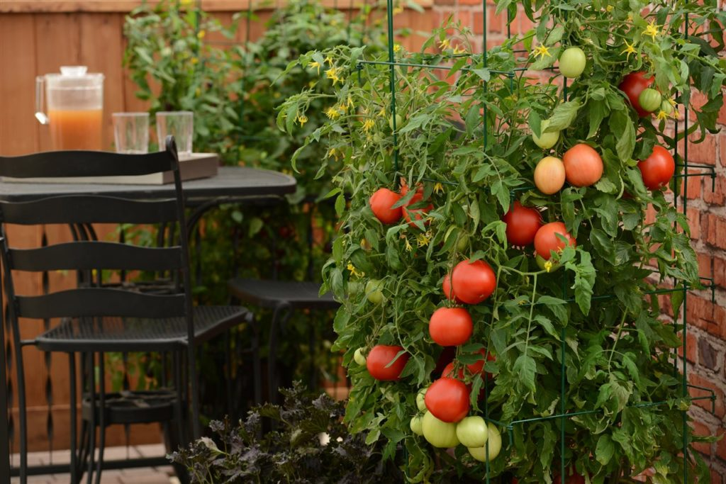 Grow Your Own Food In Small Spaces Glendale Cherry Creek